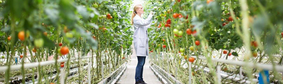 woman in white lab coat inspecting tomato plants